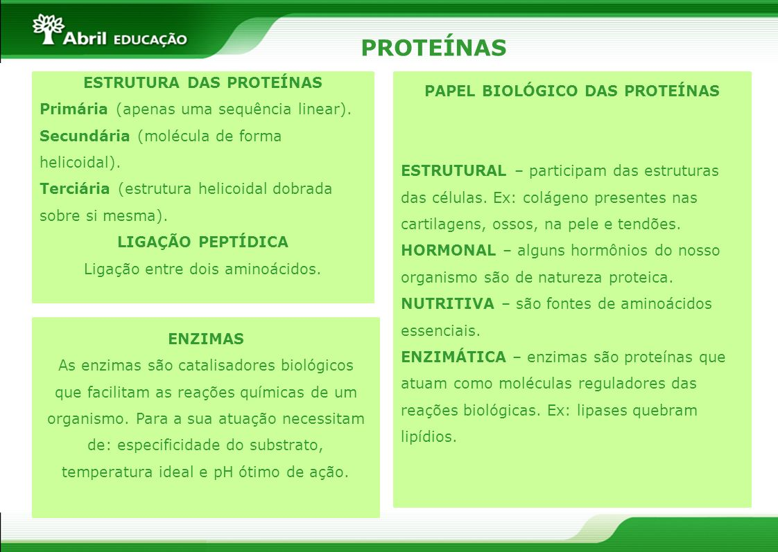 ESTRUTURA DAS PROTEÍNAS PAPEL BIOLÓGICO DAS PROTEÍNAS