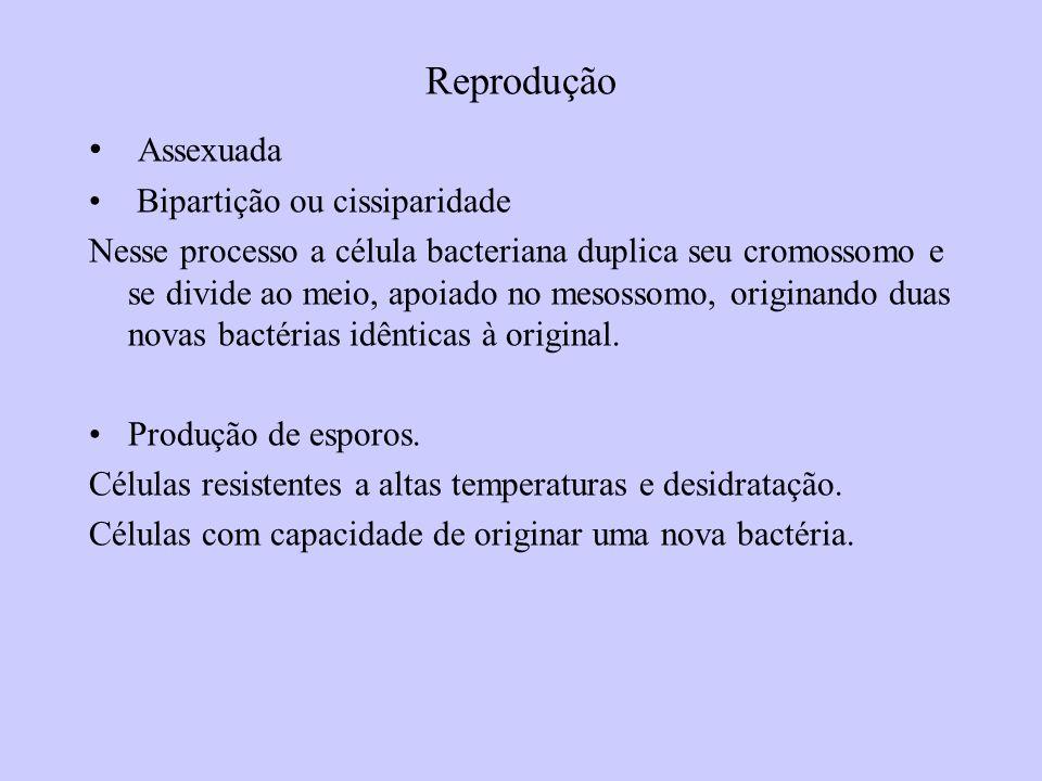 Reprodução Assexuada Bipartição ou cissiparidade