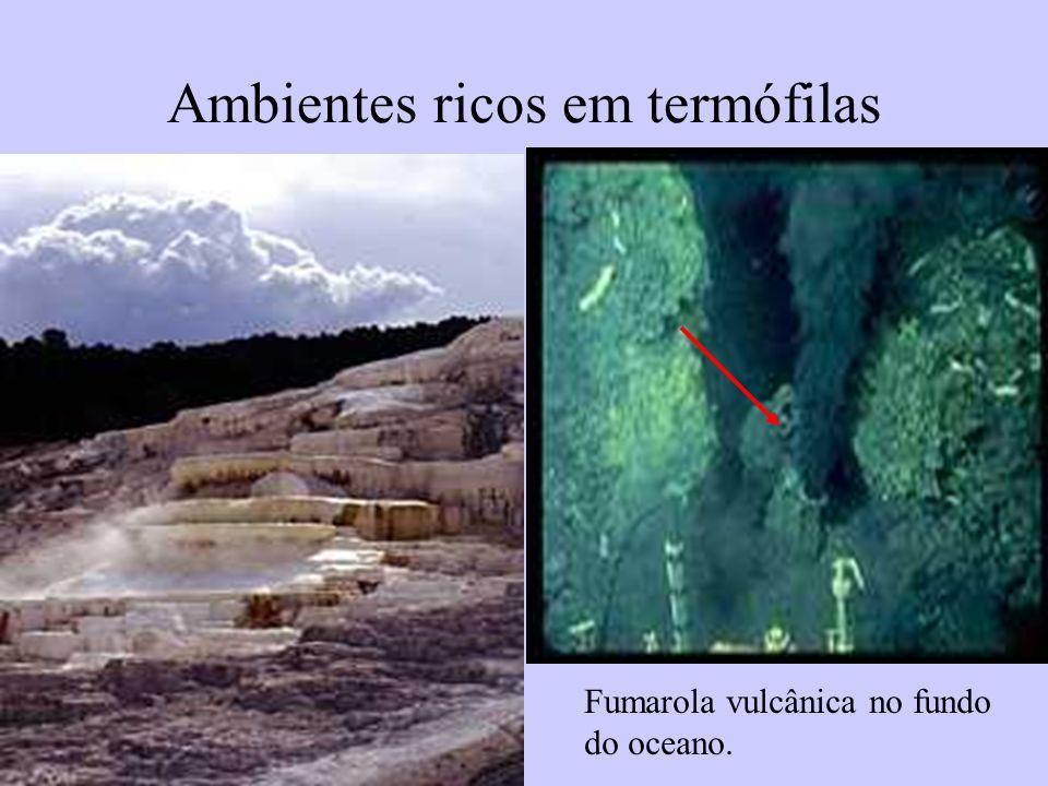 Ambientes ricos em termófilas