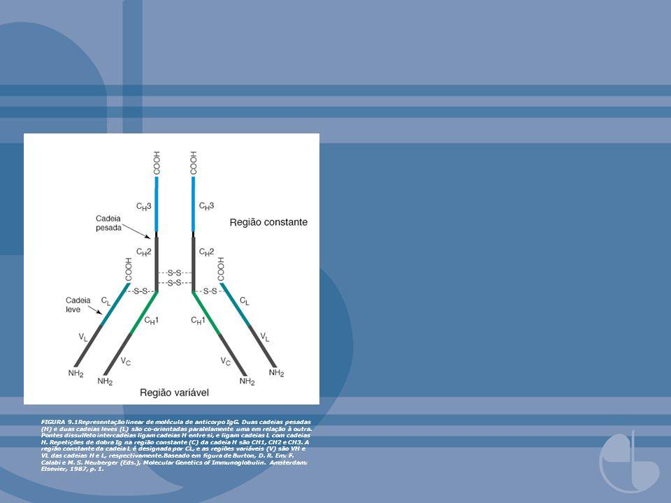 FIGURA 9. 1Representação linear de molécula de anticorpo IgG