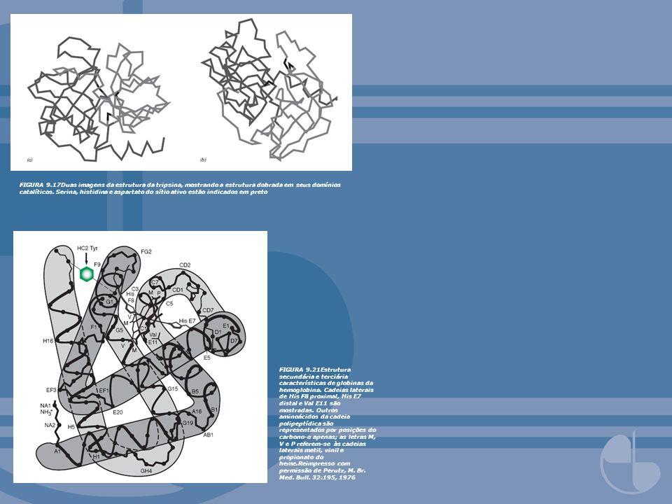 FIGURA 9.17Duas imagens da estrutura da tripsina, mostrando a estrutura dobrada em seus domínios catalíticos. Serina, histidina e aspartato do sítio ativo estão indicados em preto