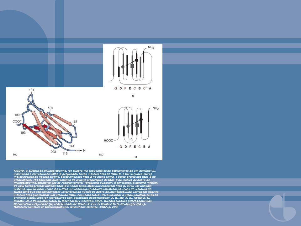 FIGURA 9. 4Dobra de Imunoglobulina