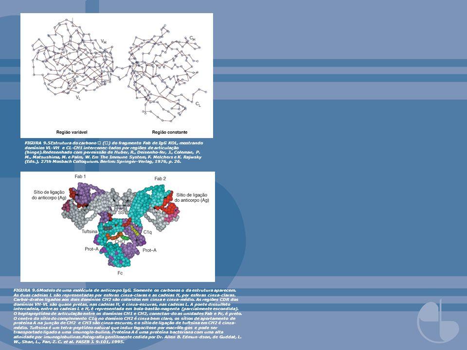 FIGURA 9.5Estrutura do carbono  () do fragmento Fab de IgG KOL, mostrando domínios VL-VH e CL-CH1 interconec-tados por regiões de articulação (hinge).Redesenhado com permissão de Huber, R., Deisenho-fer, J., Coleman, P. M., Matsushima, M. e Palm, W. Em The Immune System, F. Melchers e K. Rajwsky (Eds.), 27th Mosbach Colloquium. Berlim: Springer-Verlag, 1976, p. 26.