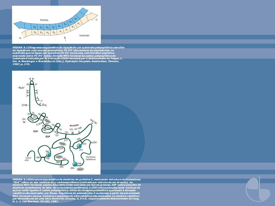 FIGURA 9.12Diagrama esquemático de ligação de um substrato polipeptídico com sítio de ligação em uma enzima proteolítica. P5-P3' são resíduos de aminoácidos no substrato que se ligam aos subsítios S5-S3' na enzima, com hidrólise peptídica ocorrendo entre P1-P1' (seta). Direção NH2-terminal da cadeia polipeptídica do substrato é indicada por N, e direção COOH-terminal por C.Redesenhado de Polgar, L. Em: A. Neuberger e Brockleburst (Eds.), Hydrolytic Enzymes. Amsterdam, Elsevier, 1987, p. 174.
