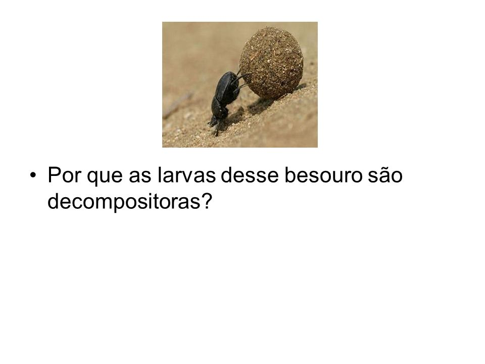 Por que as larvas desse besouro são decompositoras
