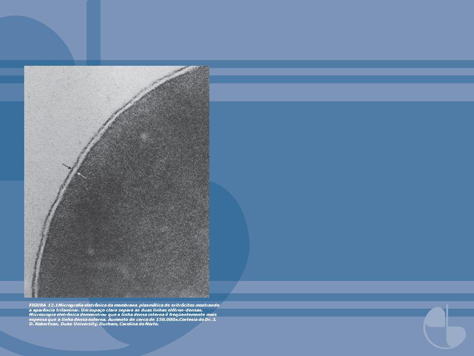 FIGURA 12.1Micrografia eletrônica da membrana plasmática de eritrócitos mostrando a aparência trilaminar.
