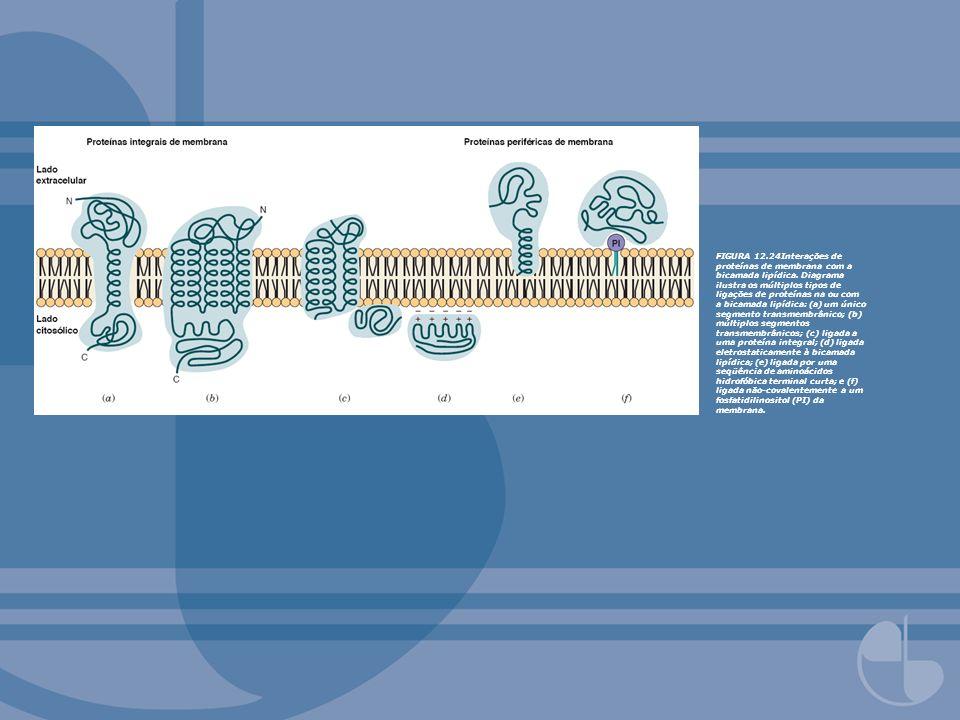 FIGURA 12.24Interações de proteínas de membrana com a bicamada lipídica.