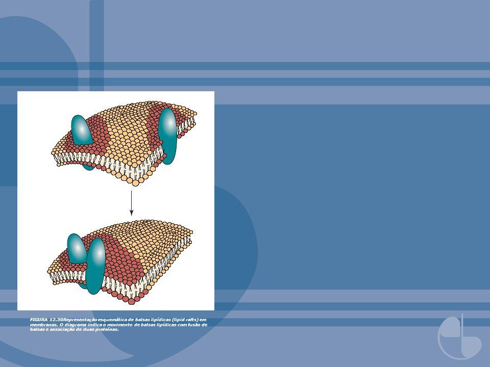 FIGURA 12.30Representação esquemática de balsas lipídicas (lipid rafts) em membranas.
