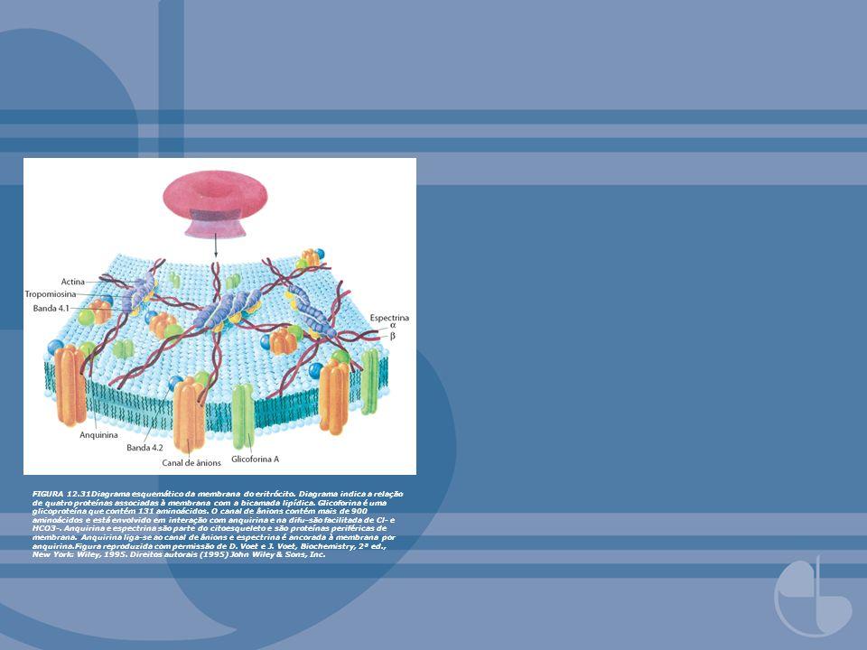 FIGURA 12. 31Diagrama esquemático da membrana do eritrócito