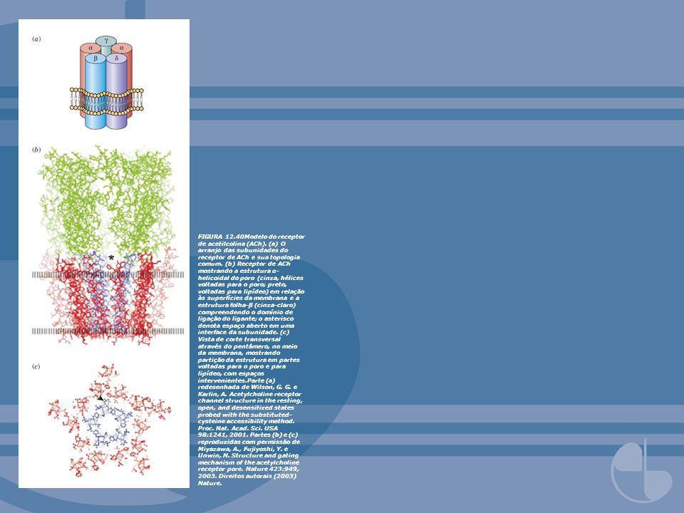 FIGURA 12. 40Modelo do receptor de acetilcolina (ACh)