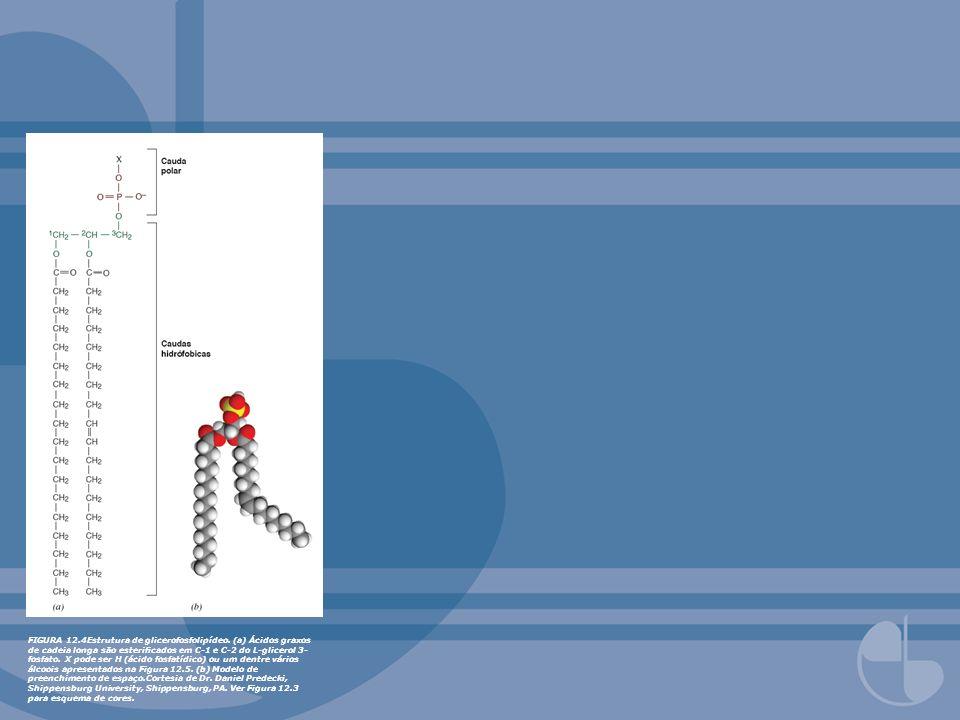 FIGURA 12. 4Estrutura de glicerofosfolipídeo