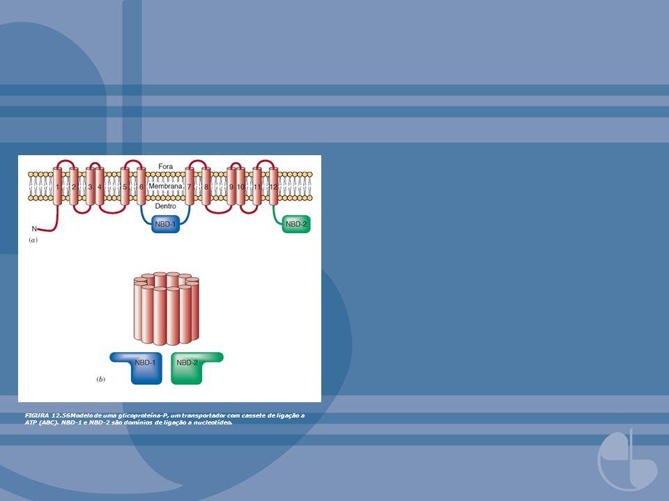 FIGURA 12.56Modelo de uma glicoproteína-P, um transportador com cassete de ligação a ATP (ABC).