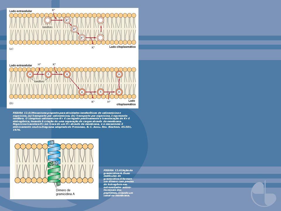 FIGURA 12.61Mecanismo proposto para atividades ionoforéticas de valinomicina e nigericina. (a) Transporte por valinomicina; (b) Transporte por nigericina. I representa ionóforo. O complexo valinomicina-K+ é carregado positivamente e translocação de K+ é eletrogênica, levando à criação de uma separação de cargas através da membrana. Nigericina transloca K+ em troca de um H+ através da membrana, e o mecanismo é eletricamente neutro.Diagrama adaptado de Pressman, B. C. Annu. Rev. Biochem. 45:501, 1976.