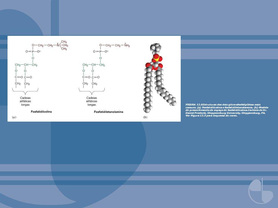 FIGURA 12. 6Estruturas dos dois glicerofosfolipídeos mais comuns