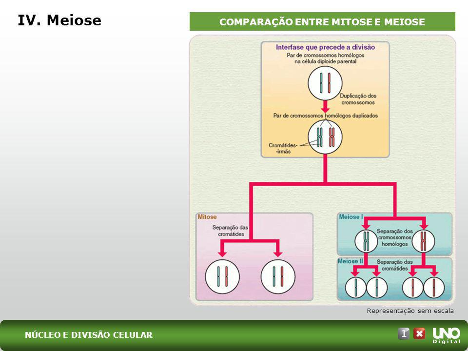 COMPARAÇÃO ENTRE MITOSE E MEIOSE
