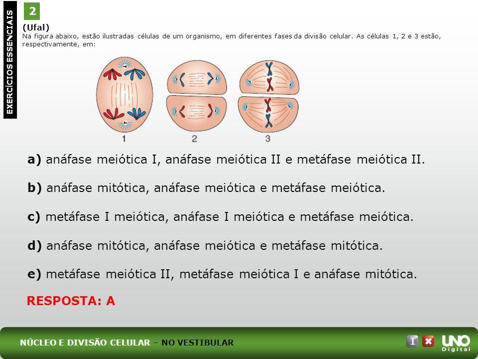 a) anáfase meiótica I, anáfase meiótica II e metáfase meiótica II.