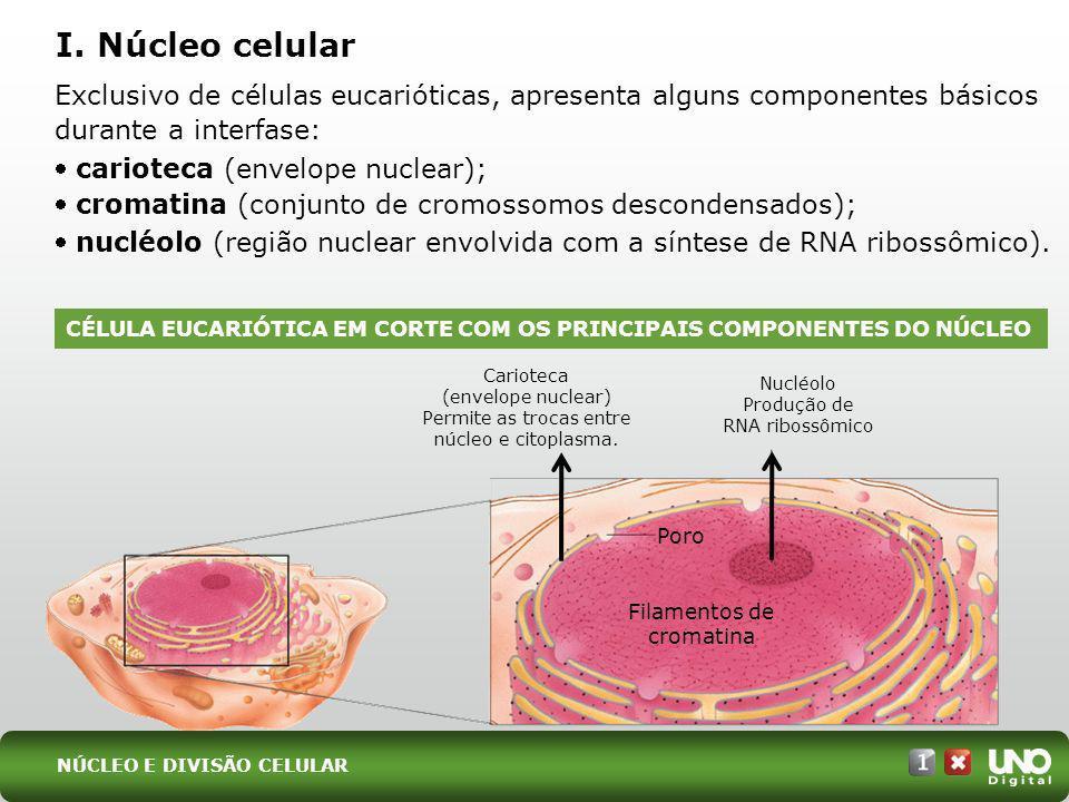 Bio-cad-1-top-3 – 3 Prova I. Núcleo celular. Exclusivo de células eucarióticas, apresenta alguns componentes básicos durante a interfase: