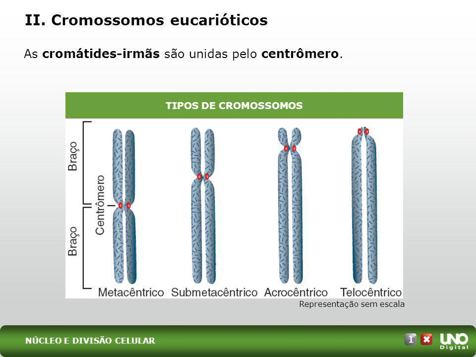 II. Cromossomos eucarióticos