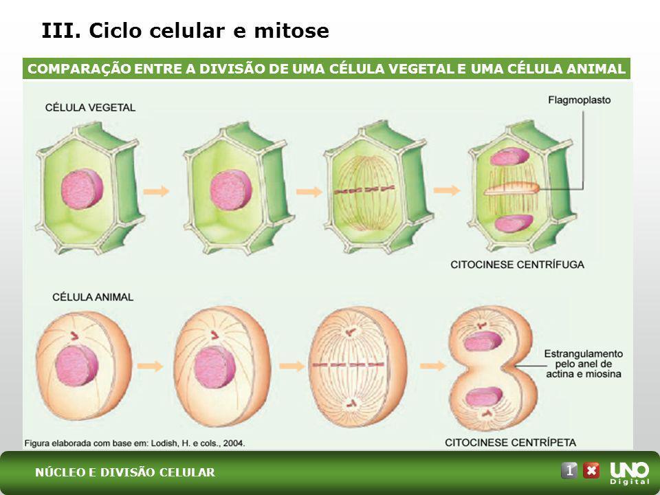 III. Ciclo celular e mitose
