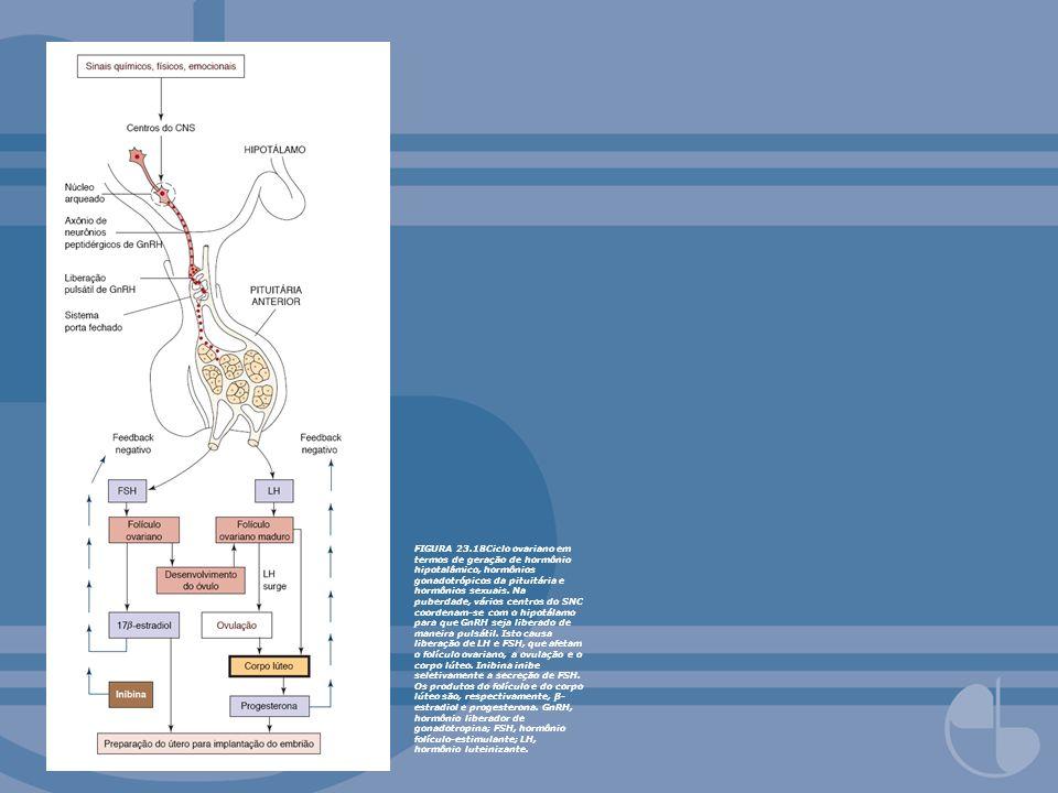 FIGURA 23.18Ciclo ovariano em termos de geração de hormônio hipotalâmico, hormônios gonadotrópicos da pituitária e hormônios sexuais.