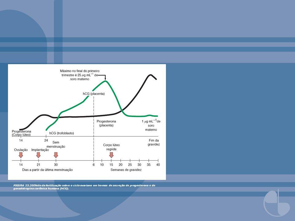 FIGURA 23.20Efeito da fertilização sobre o ciclo ovariano em termos de secreção de progesterona e de gonadotropina coriônica humana (hCG).