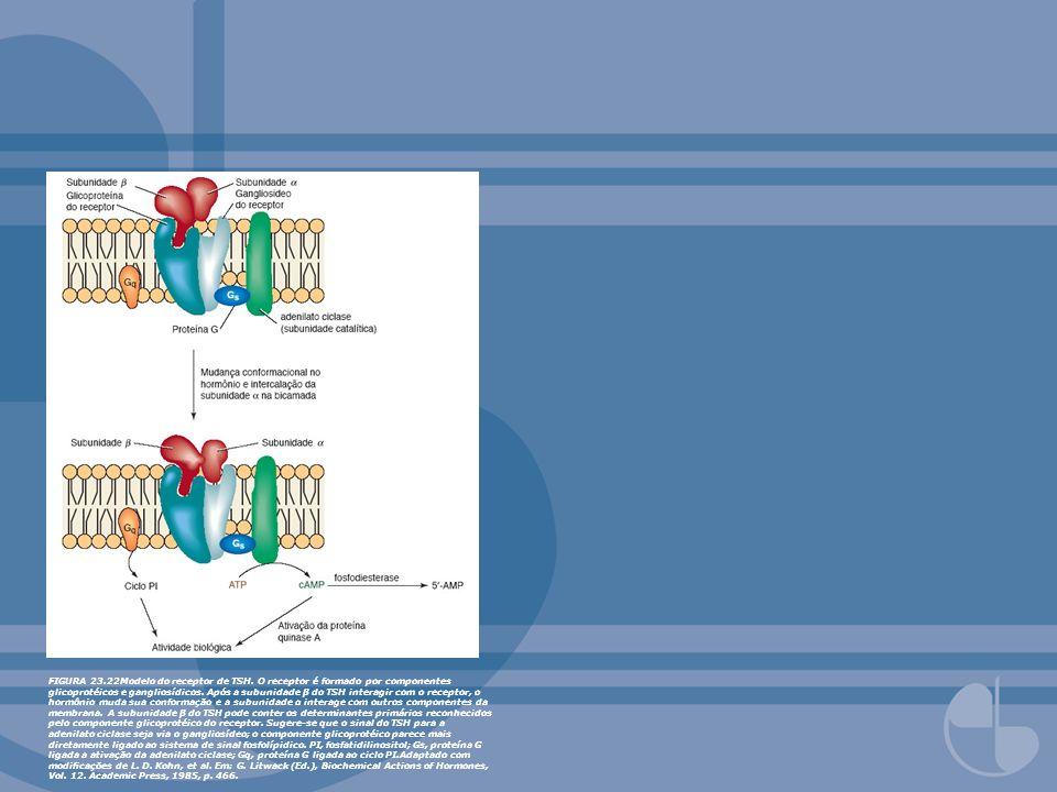 FIGURA 23. 22Modelo do receptor de TSH