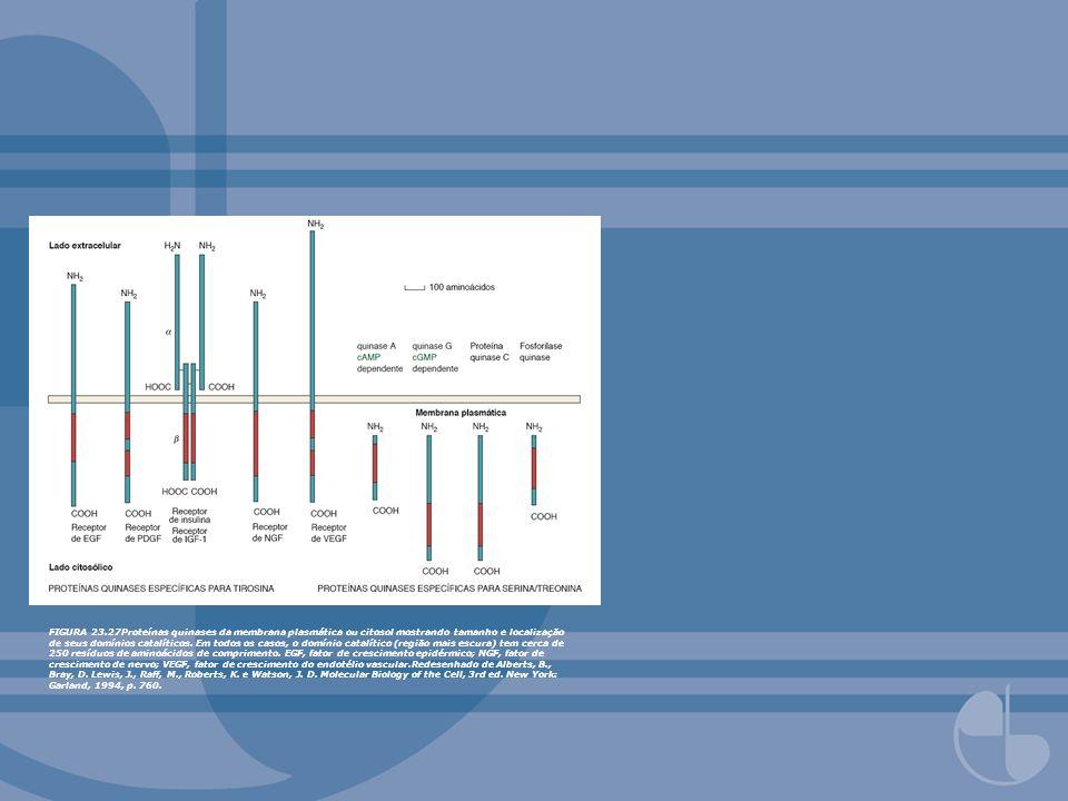 FIGURA 23.27Proteínas quinases da membrana plasmática ou citosol mostrando tamanho e localização de seus domínios catalíticos.