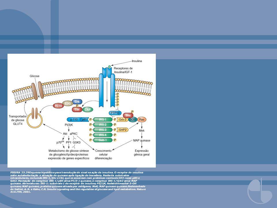 FIGURA 23.29Esquema hipotético para transdução de sinal na ação da insulina.