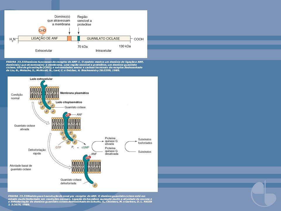 FIGURA 23. 32Domínios funcionais do receptor de ANF-1