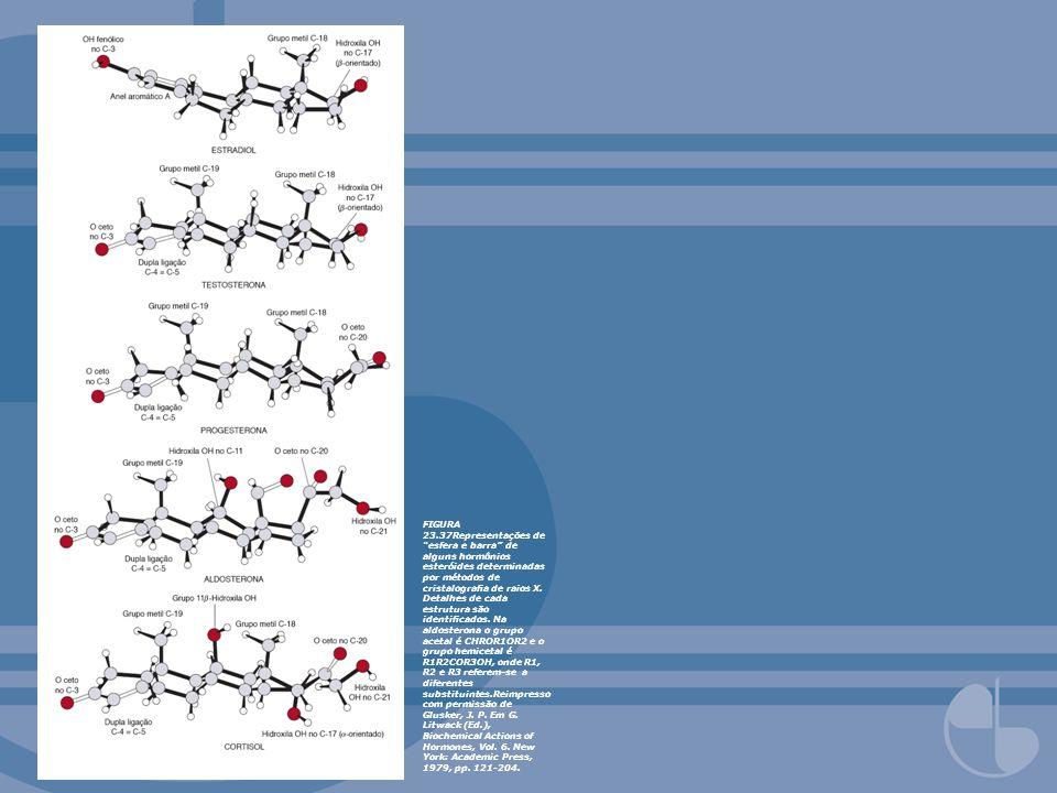 FIGURA 23.37Representações de esfera e barra de alguns hormônios esteróides determinadas por métodos de cristalografia de raios X.