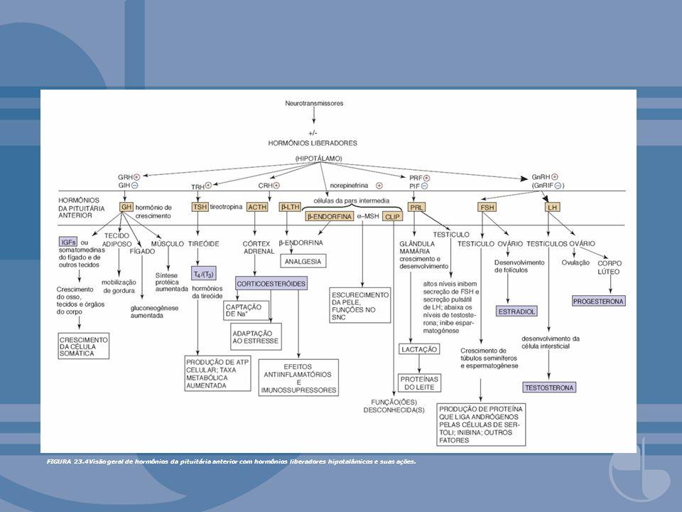 FIGURA 23.4Visão geral de hormônios da pituitária anterior com hormônios liberadores hipotalâmicos e suas ações.