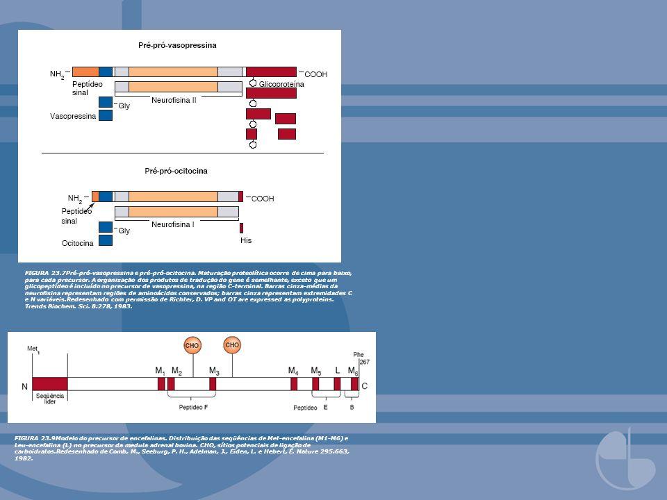FIGURA 23. 7Pré-pró-vasopressina e pré-pró-ocitocina