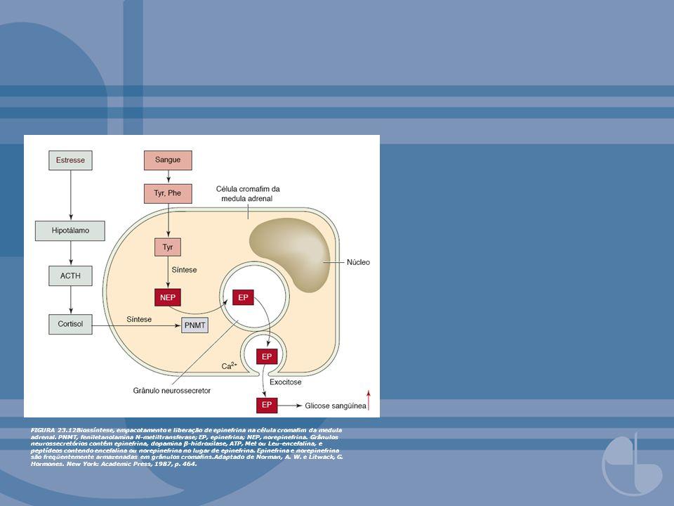 FIGURA 23.12Biossíntese, empacotamento e liberação de epinefrina na célula cromafim da medula adrenal.