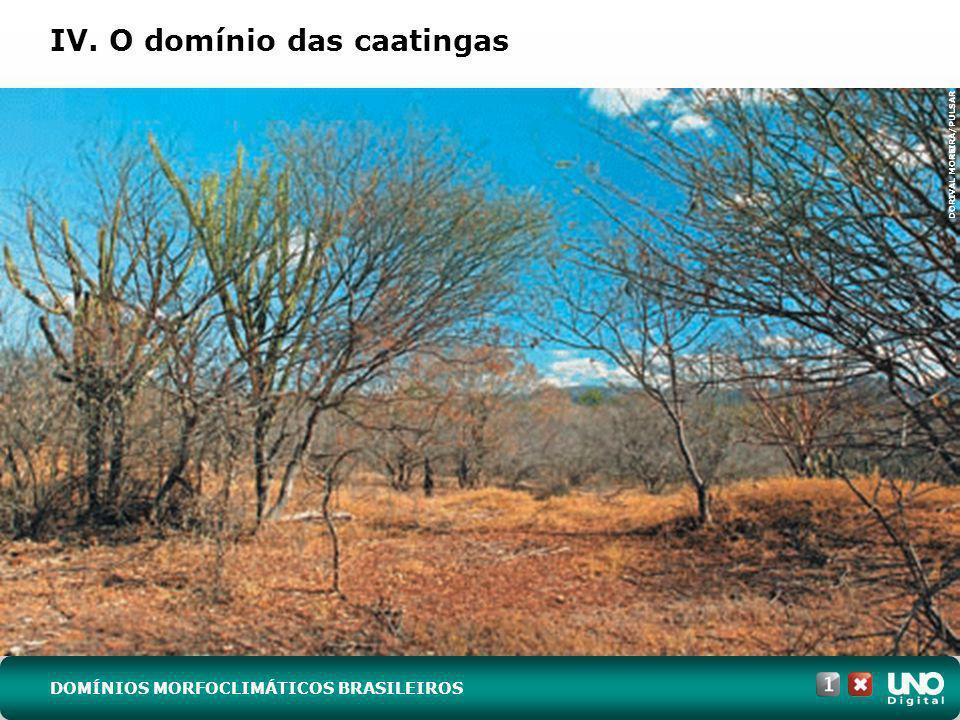 IV. O domínio das caatingas