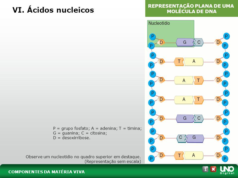 REPRESENTAÇÃO PLANA DE UMA MOLÉCULA DE DNA