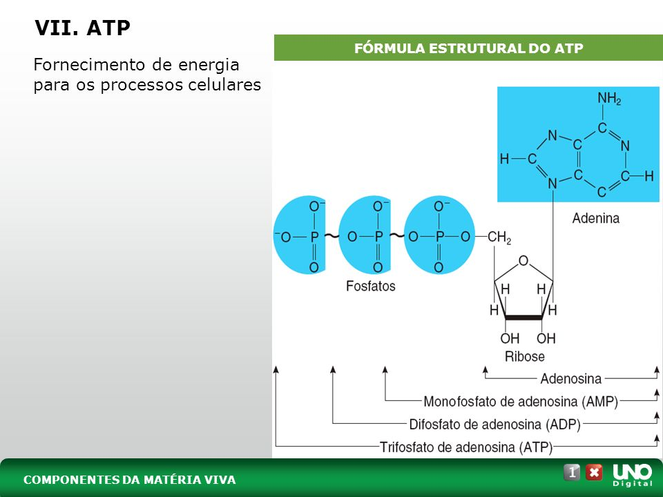 FÓRMULA ESTRUTURAL DO ATP