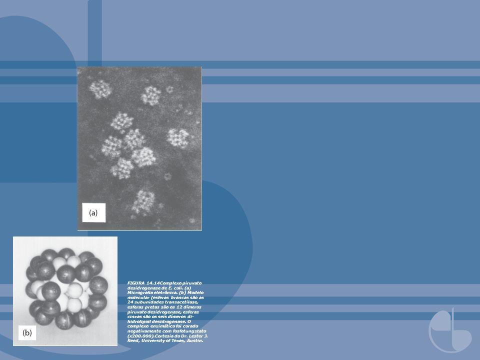 FIGURA 14. 14Complexo piruvato desidrogenase de E. coli