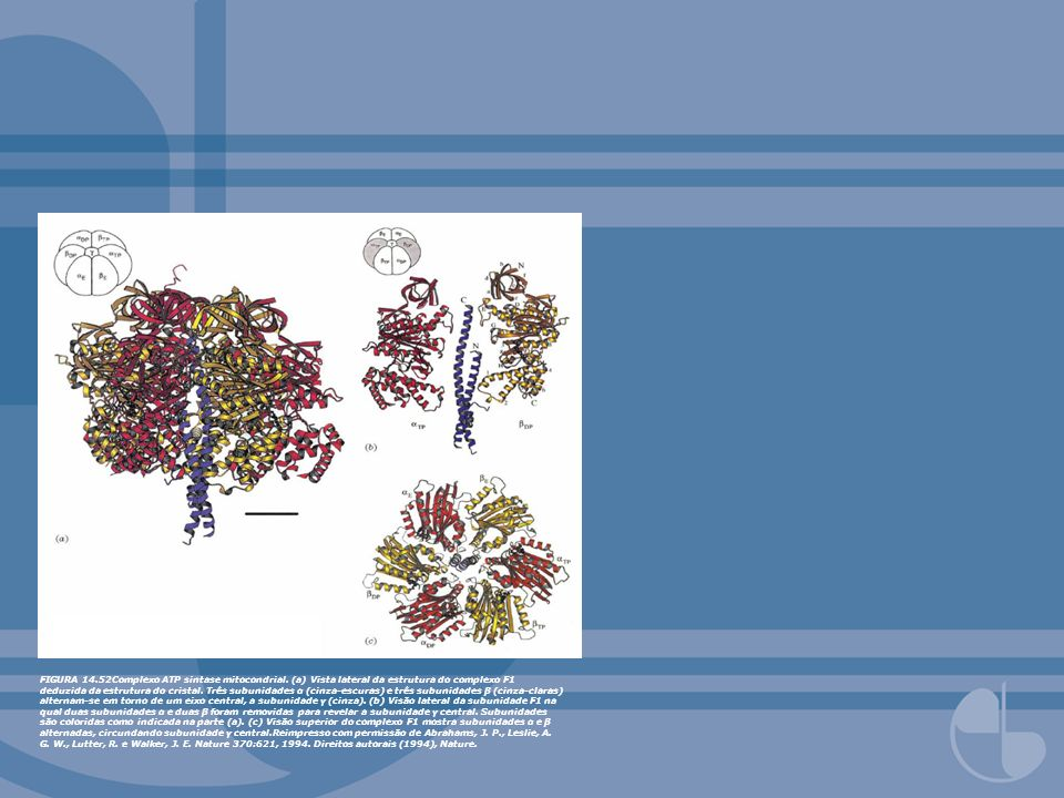 FIGURA 14. 52Complexo ATP sintase mitocondrial