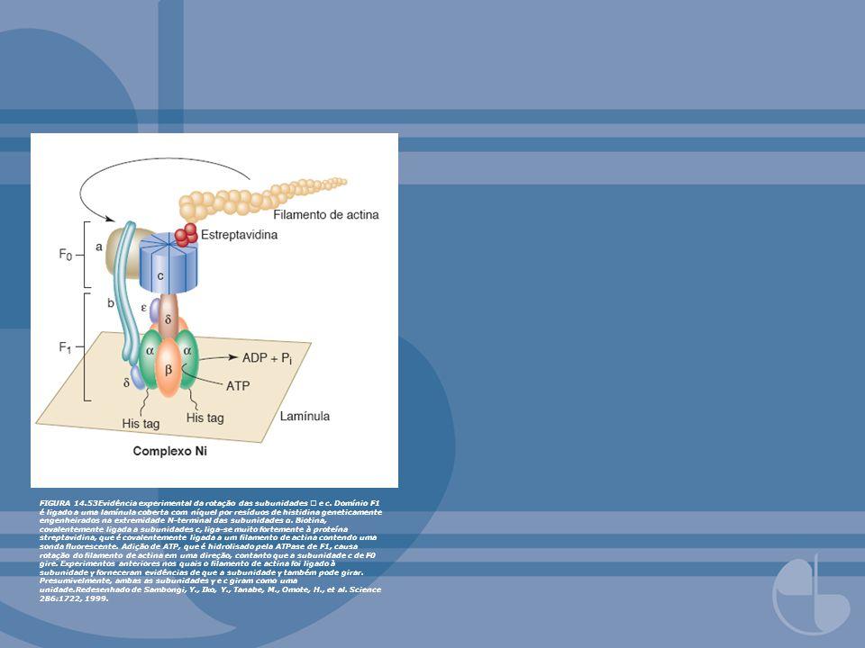 FIGURA 14. 53Evidência experimental da rotação das subunidades  e c
