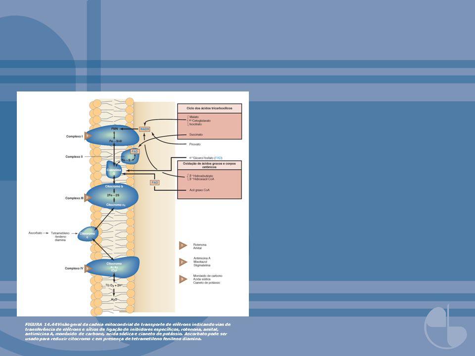 FIGURA 14.44Visão geral da cadeia mitocondrial de transporte de elétrons indicando vias de transferência de elétrons e sítios de ligação de inibidores específicos, rotenona, amital, antimicina A, monóxido de carbono, azida sódica e cianeto de potássio.