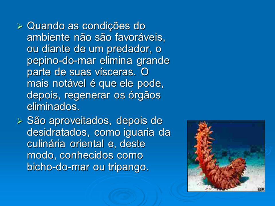 Quando as condições do ambiente não são favoráveis, ou diante de um predador, o pepino-do-mar elimina grande parte de suas vísceras. O mais notável é que ele pode, depois, regenerar os órgãos eliminados.
