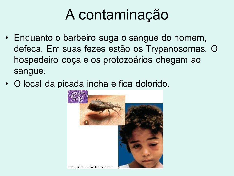 A contaminação