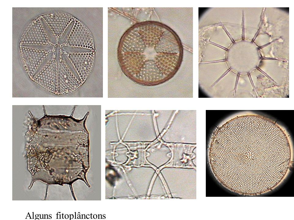 Alguns fitoplânctons