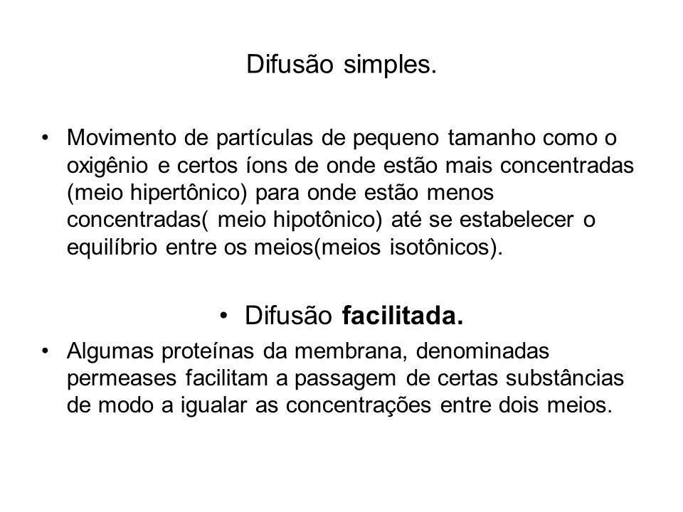 Difusão simples. Difusão facilitada.