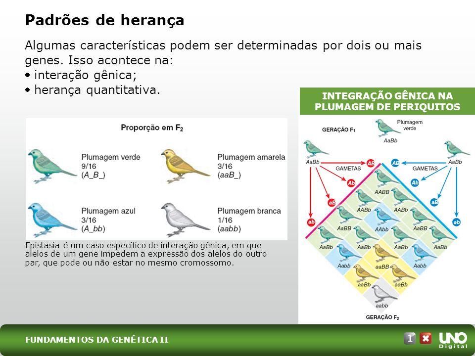 INTEGRAÇÃO GÊNICA NA PLUMAGEM DE PERIQUITOS