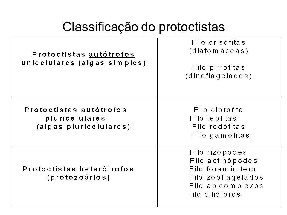 Classificação do protoctistas