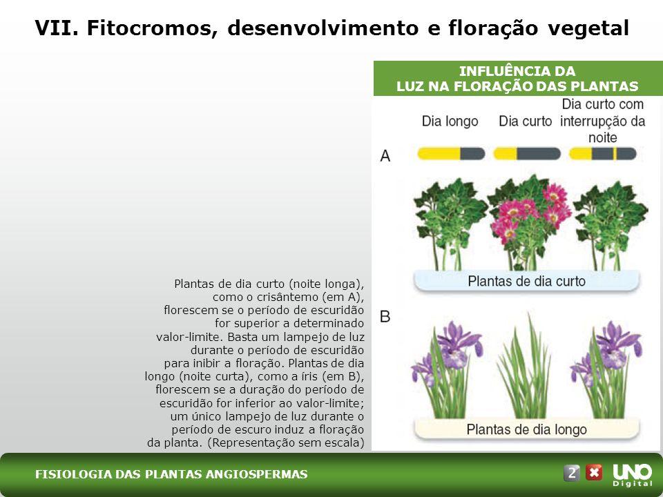 VII. Fitocromos, desenvolvimento e floração vegetal