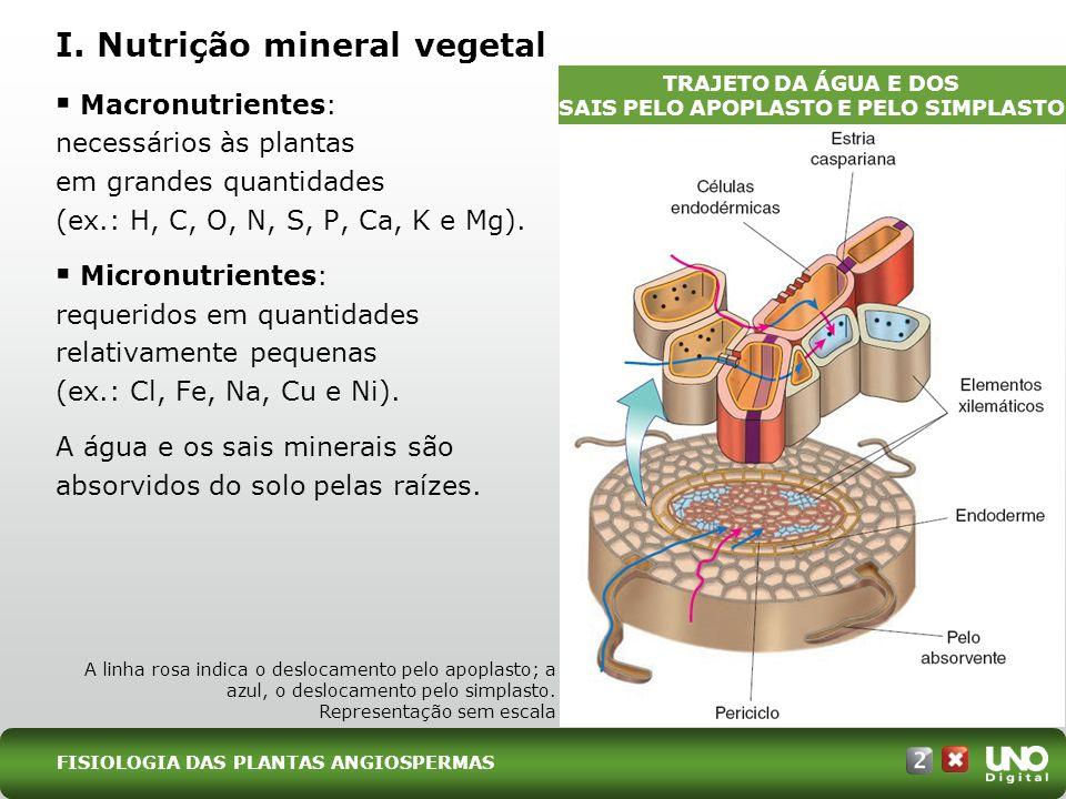 I. Nutrição mineral vegetal