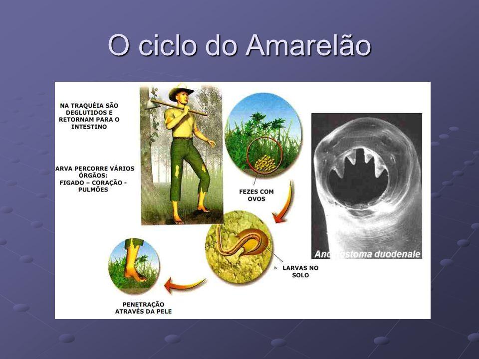 O ciclo do Amarelão