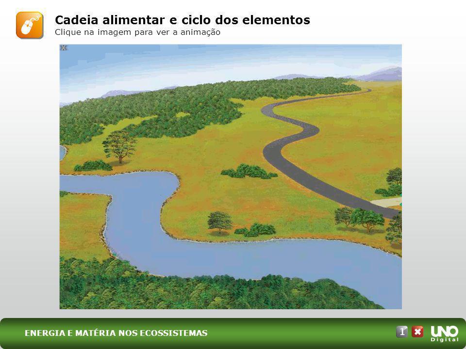 Cadeia alimentar e ciclo dos elementos